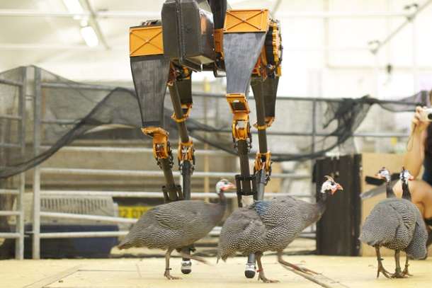 atrias Американцы создали самого быстрого двуногого робота в мире
