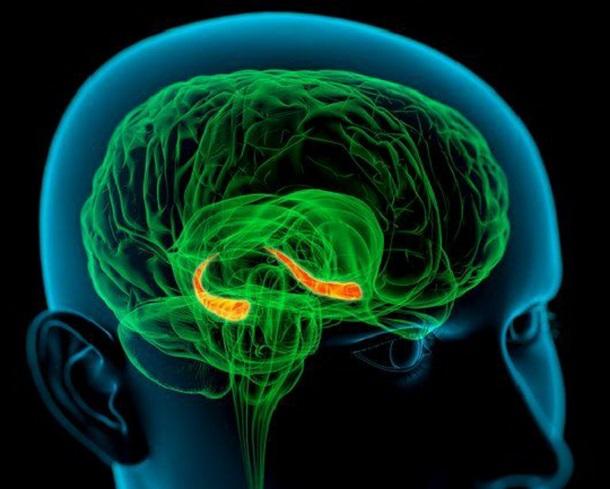 c0036821-hippocampus_in_the_brain_artwork-spl Уникальный случай дежавю зафиксирован у жителя Великобритании