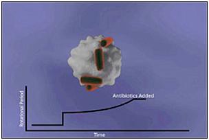 ctvf Ученые научились взвешивать бактерии
