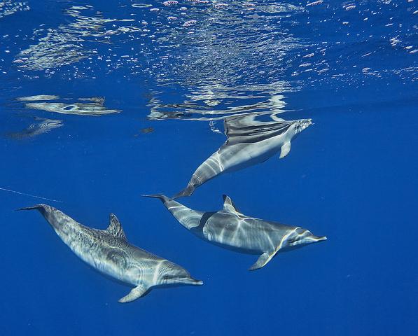 d0b4d0b5d0bbd18cd184d0b8d0bdd18b Акул отпугнут патрули из дельфинов и касаток