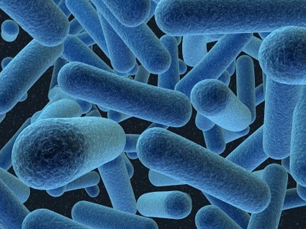 d0bcd0b8d0bad180d0bed184d0bbd0bed180d0b0 Микрофлора кишечника в ответе за нашу осторожность?