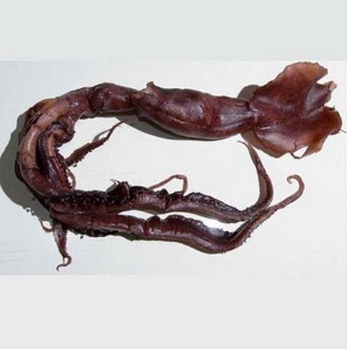 d0bdd0bed0b2d18bd0b9-d0b2d0b8d0b4-d0bad0b0d0bbd18cd0bcd0b0d180d0bed0b21 Новый вид кальмаров обнаружен в Индийском океане