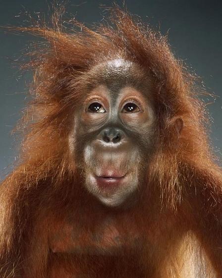 d0bed180d0b0d0bdd0b3d183d182d0b0d0bdd0b3 Необходимость в коммуникации заставила мозг обезьяны прогрессировать быстрее