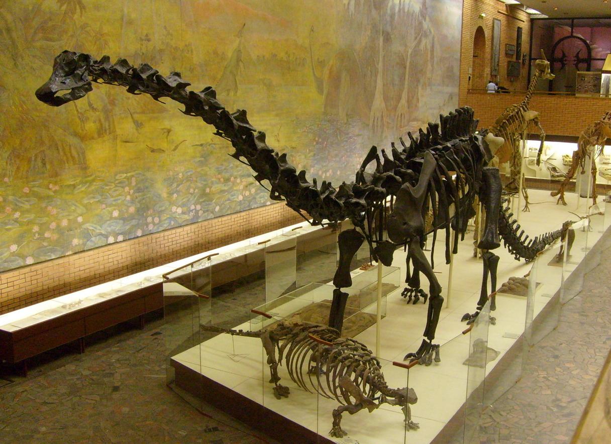 diplodocusskeleton В Англии продан скелет диплодока за 400 000 фунтов