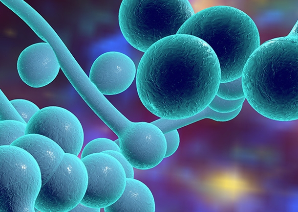 five-facts-about-candida-auris_img-mxau0f8khf9td133vhpuay5phqmo8w9tif1bwdyaj0 В США распространяется новая смертельно опасная грибковая инфекция