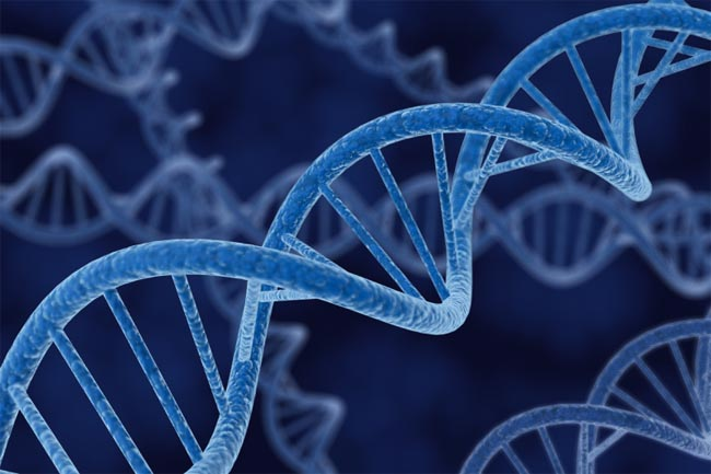 genom-human1 Создана компьютерная программа, способная создавать трехмерную модель лица человека по его ДНК