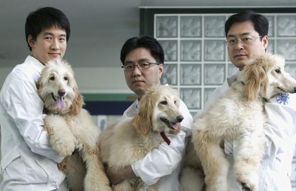 klonirovanie-zhivotnyih1 Китайцы собираются построить фабрику для клонирования домашних животных