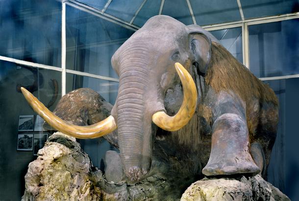 mammoth_fauna В России собираются клонировать вымерших животных