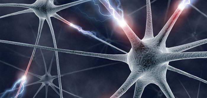 neurologie-groot1-e1401431544836-1038x5761 Ученые узнали почему сон улучшает память