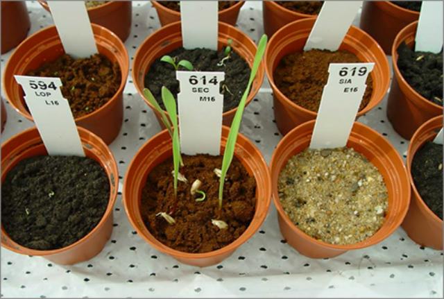 o_932071 В ближайшее десятилетие на Марсе начнут выращивать овощи