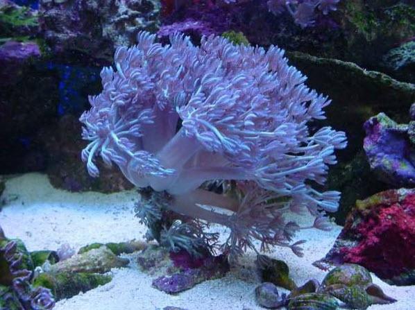rj В процессе размножения коралловые полипы ориентируются на Луну