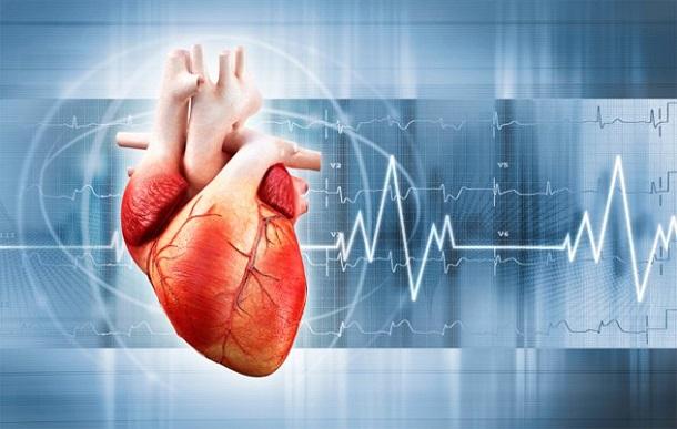 serdce Российские ученые собираются создать искусственное сердце