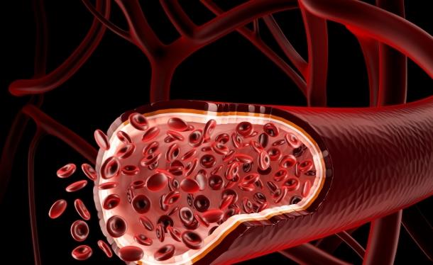 shutterstock_133011740 Ученые создали материал для кровеносных сосудов, который превращается в живую ткань