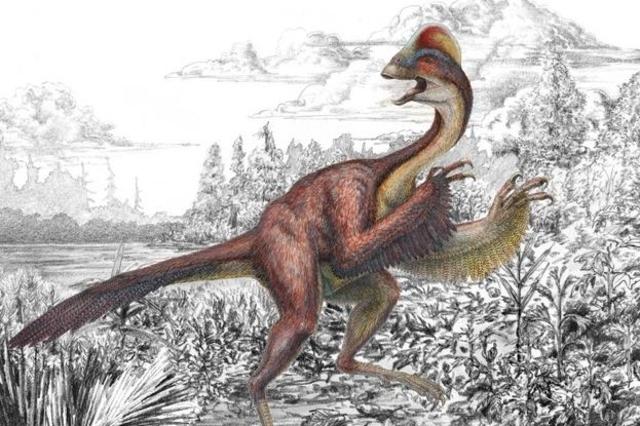 topelement Археологи обнаружили ископаемые неизвестного пернатого динозавра