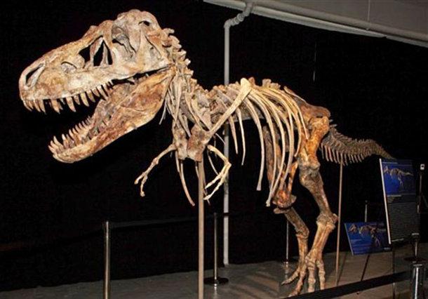 trex В костях динозавров найдены клетки возрастом 75 миллионов лет