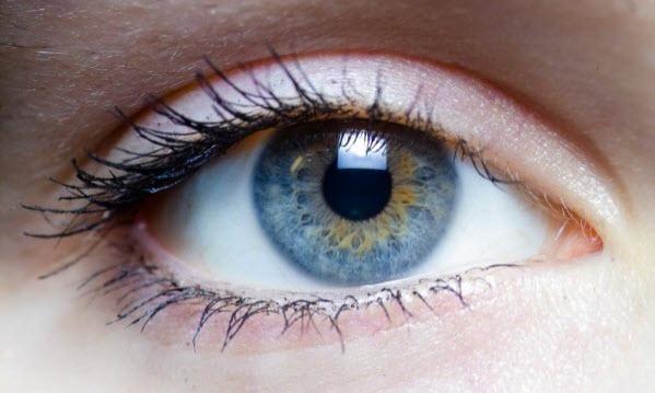 ukfp Вернуть зрение людям с проблемами сетчатки помогут зеленые водоросли