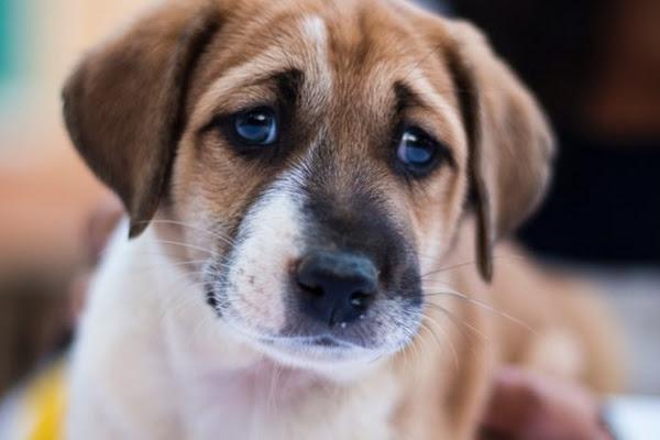 unnamed Ученые выяснили, как собаки научились манипулировать людьми