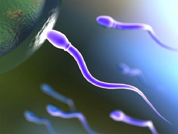 Искусственные сперматозаоиды