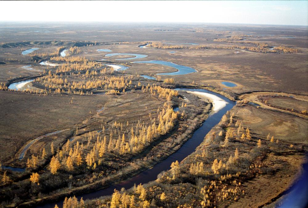 yamal_high На Ямале обнаружены неизвестные доселе растения